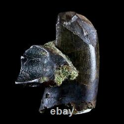 1.3 Daspletosaurus Tyrannosaur, 0.7 Chasmosaurus Fossil Tooth Dinosaur T-REX