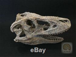 1/4 Tyrannosaurus Rex Head Skull Dinosaur Skeleton Animal Trex GK Collector Toys