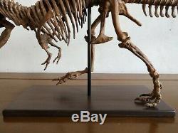 65CMDinosaur model / T-REX skeleton Model BFJ Z1901
