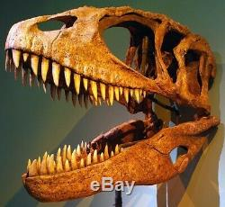 African T-Rex Carcharodontosaurus Dinosaur Tooth XL 3 & 3/8 in. NATURAL