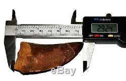 CARCHARODONTOSAURUS Dinosaur Tooth 2.924 Fossil African T-Rex MDB #14734 13o
