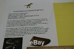 Carcharodontosaurus dinosaur CARCHARODON TOOTH 2.77 AKA African TREX T REX CS12