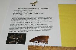 Carcharodontosaurus dinosaur CARCHARODON TOOTH 2.78 AKA African TREX T REX CS11