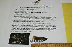 Carcharodontosaurus dinosaur CARCHARODON TOOTH 2 AKA African TREX T REX TC1