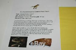 Carcharodontosaurus dinosaur CARCHARODON TOOTH 3.25 AKA African TREX T REX TC7
