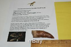 Carcharodontosaurus dinosaur CARCHARODON TOOTH 3.73 AKA African TREX T REX CS14