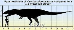 Dent Fossile Dinosaure Carcharodontosaurus T-Rex Dinosaur fossil tooth 100 mm