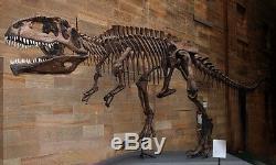 Dent Fossile Dinosaure Carcharodontosaurus T-Rex Dinosaur fossil tooth 125 mm