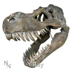 Dinosaur Head Skulls Choose Tyrannosaurus Rex T-Rex or Triceratops 2 Sizes