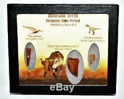 Dinosaur Teeth (Set of 3) African T-Rex Pterosaur Dromeosaur withCOA LDB 14391 15o