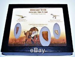 Dinosaur Teeth (Set of 3) African T-Rex Pterosaur Dromeosaur withCOA LDB 14405 15o