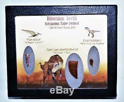 Dinosaur Teeth (Set of 3) African T-Rex Pterosaur Dromeosaur withCOA LDB 14406 15o