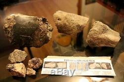 Dinosaur Tyrannosaurus Rex fossil part metatarsal bone Hell Creek Montana t rex