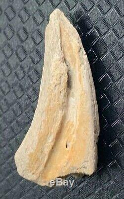 Dromaeosaur Raptor Claw Fossil Hell Creek Dinosaur Bone Rare T Rex Make Offer