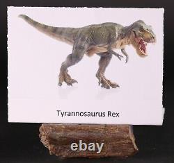 Fossil Dinosaur Tyrannosaurus T Rex Rib Pc. Hell Creek Montana COA Free Shipping
