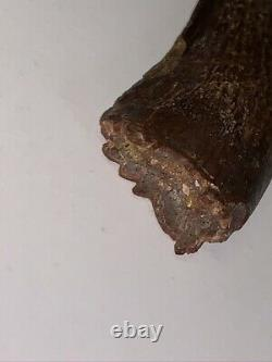 Huge 1.8 Juvenile T Rex or Nanotyrannus Tooth Dinosaur Fossil Hell Creek