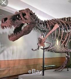 Huge 2 1/4 inch Tyrannosaurus Rex Tooth Fossil Dinosaur Teeth Trex Jurassic Park