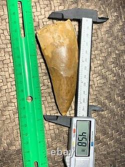 Huge 4.58 Carcharodontosaurus Tooth Dinosaur Fossil T Rex