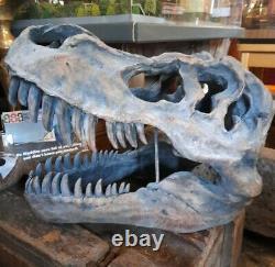 Large 51.5cm T-Rex Tyrannosaurus Rex Wall Hung Dinosaur Skull