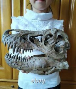 NEW, 25CM, Dinosaur model / T-REX Skull Model ZB-1802