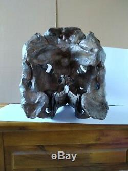 NEW, 38CMDinosaur model / T-REX Skull Small Model DB-H1811