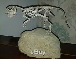 Original Fossil Psittacosaurus Dinosaur Fully Mounted by Triassica COA T-Rex