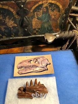 Raptor Jaw Bone Velociraptor Dromeosaur Dinosaur Fossil Jurassic Bone T-rex
