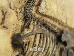 Realistic Baby Tyrannosaurus T-REX Replica Dinosaur Fossils Jurassic World