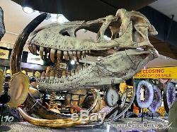 Replica T-rex Tyrannosaurus Rex Or Tarbosaurus Skull Dinosaur Fossil Jurassic