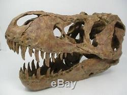 T-Rex Tyrannosaurus Dinosaur Resin Cast Skull Replica