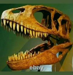 T-Rex type tooth Carcharodontosaurus Dinosaur Tooth Fossil 100% Genuine (40mm)