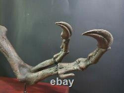 T-rex Dinosaur Life-Size Replica Arm, Complete with Claws and Stand