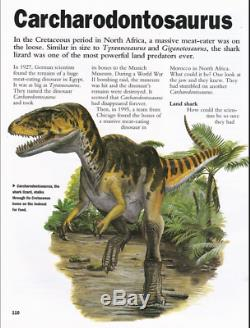 T-rex Tooth Tyrannosaurus Carcharodontosaurus Fossil Dinosaur Jurassic Treasure
