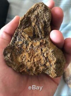 T-rex dinosaur fossil collection tyrannosaurus tooth bones jurassic park