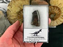 Tyrannosaurus Rex Tooth #03 Hell Creek, Montana, T rex dinosaur fossil