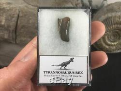 Tyrannosaurus Rex Tooth #11 S Dakota, Hell Creek Fm, T rex, Dinosaur Fossil