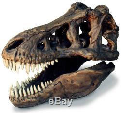Tyrannosaurus rex Dinosaur T rex Fossil Skull Replica with Stand 13 x 8 x 11