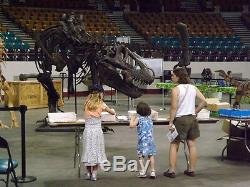 Tyrannosaurus rex T. Rex Dinosaur Cast Rental Book Now for Future Showings