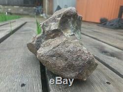 WOW! Tyrannosaurus rex femur fossil bone tibia baby humerus dinosaur t-rex