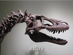Young (baby) T-rex Tyrannosaurus Dinosaur Fossil Hells Creek Maybe Only 1 Trex